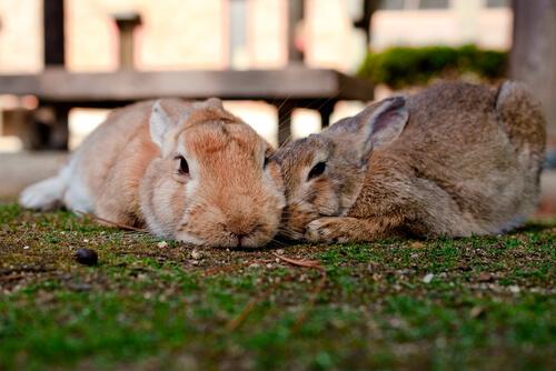 Cómo desparasitar a tu conejo