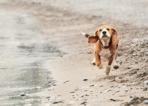 Pasear perros sin correa