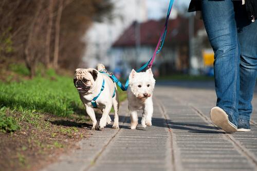 Pasear perros sin tirones