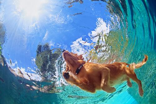 Las 6 razas de perro más adecuadas para clima cálido.