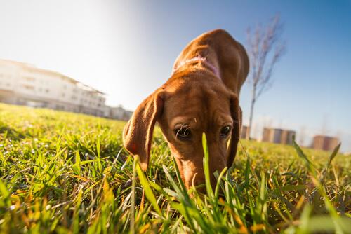 Perro con miedo al paseo