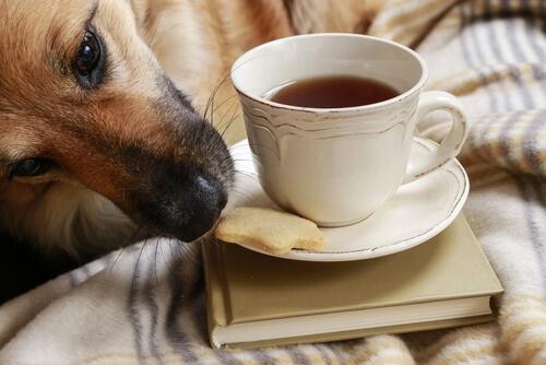 Tips para evitar que el perro robe comida