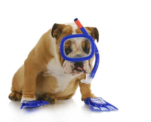 ¿Cómo enseñar a bucear a tu perro?