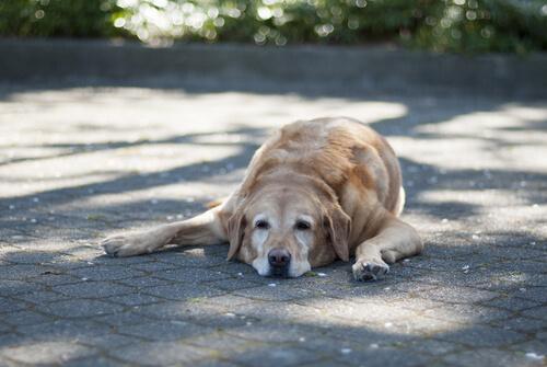 Perro toma el sol
