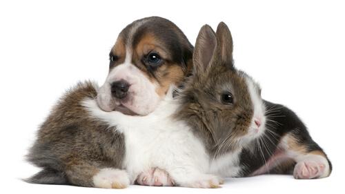 La convivencia entre un perro y un conejo
