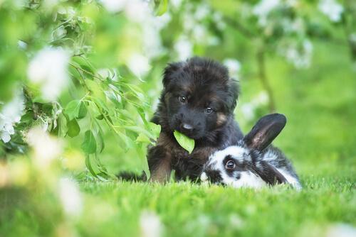 Perro y conejo jugando