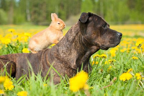 Perro y conejo juntos
