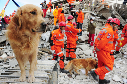 Perros de rescate: adiestramiento