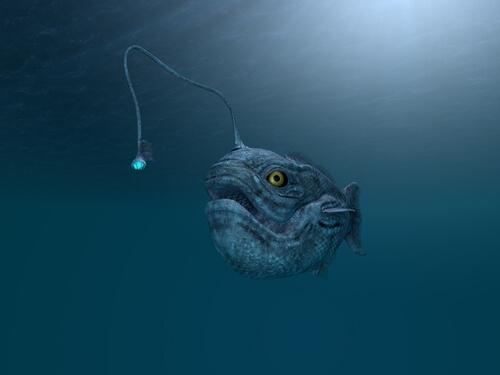 Animales que viven en las profundidades marinas