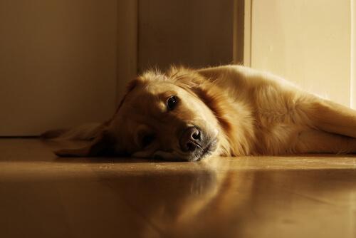 Por qué mi perro toma el sol