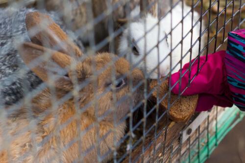 Agresividad en los conejos, ¿por qué y cómo solventarla?