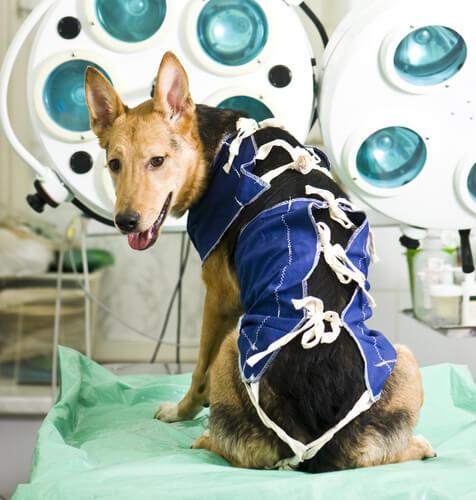 Consejos para la rehabilitación de tu mascota