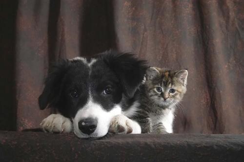 Adopción en protectora de animales