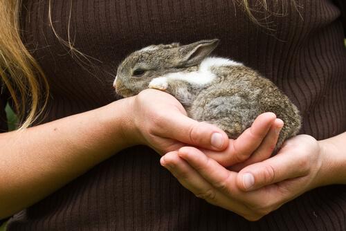 Alimentación de conejos recién nacidos