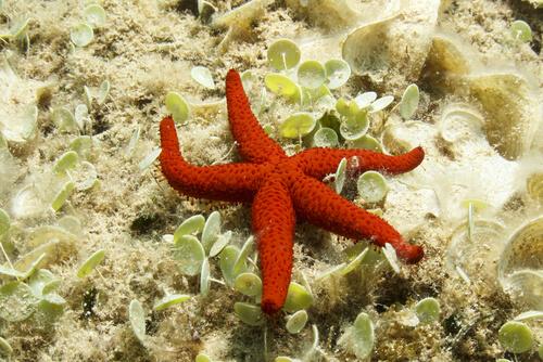 Anatomía de la estrella de mar