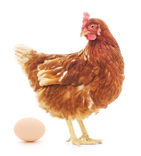 Animales que se comen los huevos