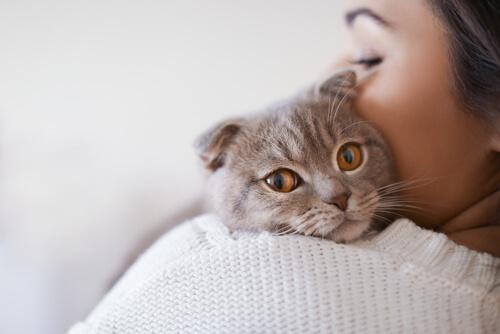 ¿Qué debo comprar antes de traer a mi gato a casa?
