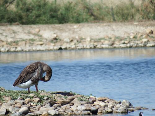 8 consejos para observar fauna salvaje