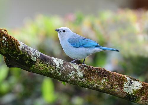 Azulejo: ave