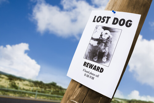 Cartel: se busca mascota