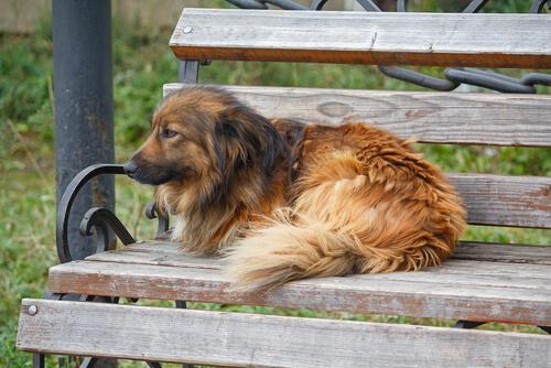 Perros callejeros, una triste realidad que no termina