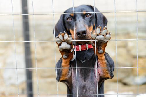 Crónica del maltrato animal en España
