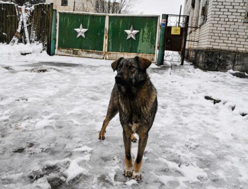 Chernobyl: animales mutados