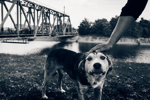 Los últimos perros de Chernobyl