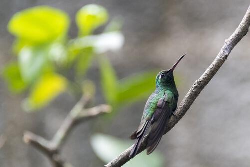 Las 5 aves más pequeñas