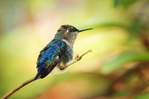 Descubre Panamá y sus 5 especies de pájaros más comunes