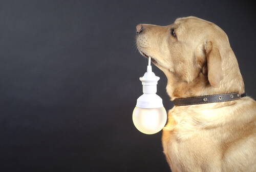 Collares luminosos para perros callejeros: descubre este proyecto