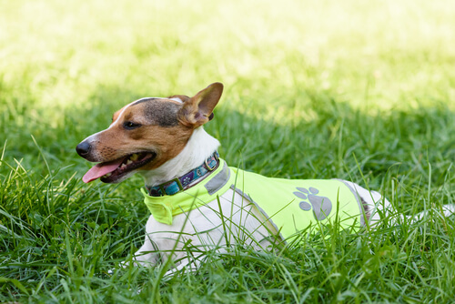 Collares para perros personalizados