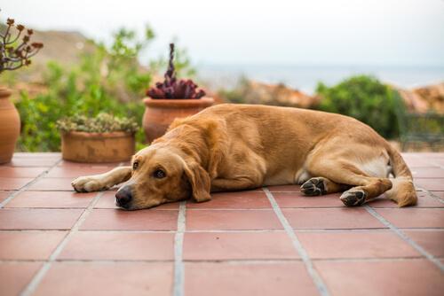 Vómitos marrones en perros: todo lo que debes saber