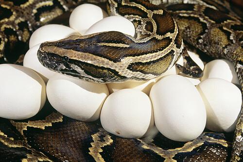 Algunas serpientes son buenas madres