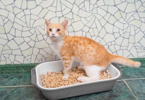 Cómo enseñar al gato a usar el arenero