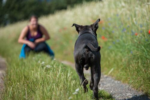 Cómo hacer que el perro acuda a tu llamada