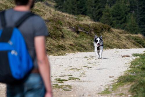 Cómo hacer el perro obedezca a la llamada