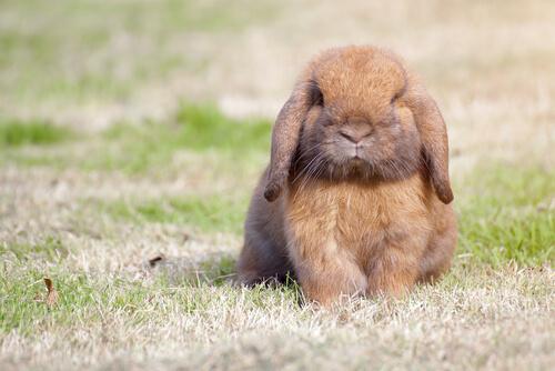 Conejos divertidos