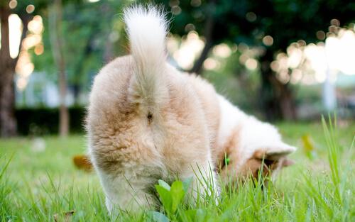 La cola en la comunicación de los perros
