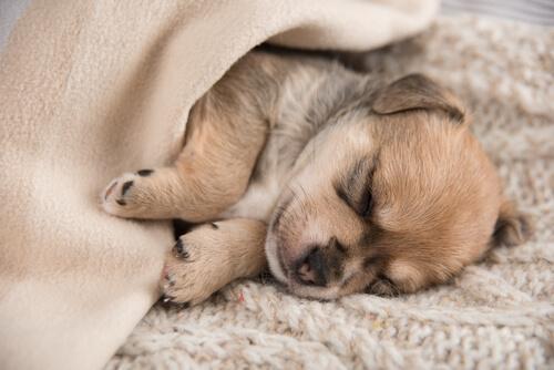 Cuánto tiene que dormir un cachorro