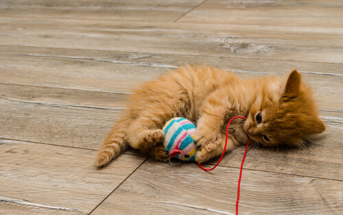 Entretenimiento para gatos