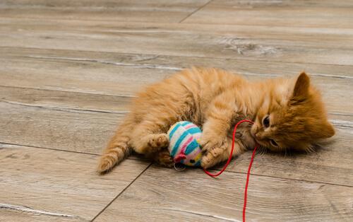 Juguetes caseros para gatos