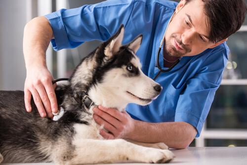 ¿Debo castrar a mi perro? Ventajas e inconvenientes