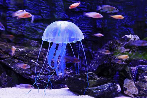 Evitar medusas