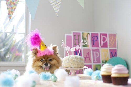 Fiesta de cumpleaños para perros