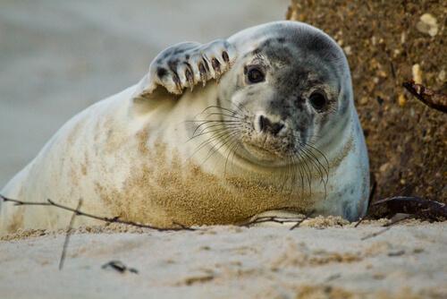 5 animales que viven en la playa