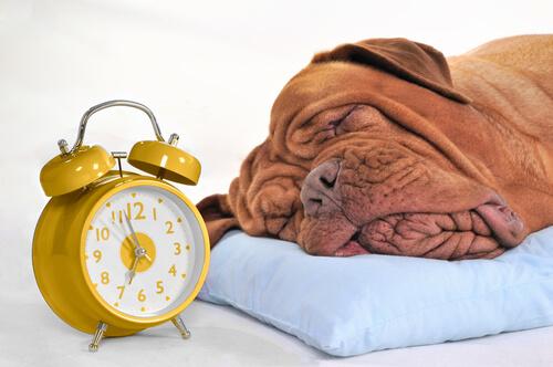 Horas de sueño de un perro