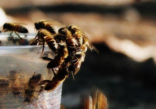 Importancia de las abejas polinizadoras