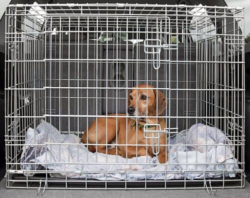 Jaulas de criaderos de perros
