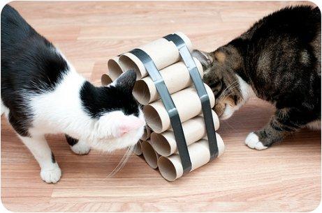 Juegos para gatos caseros